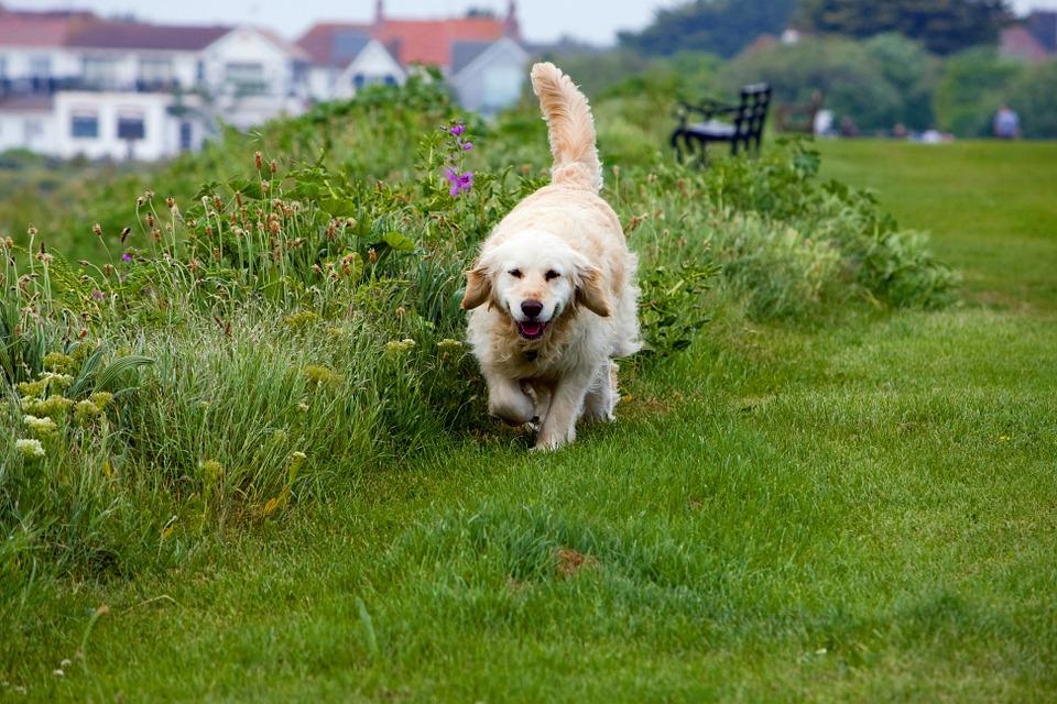 97-jarige laat tien honden per dag uit