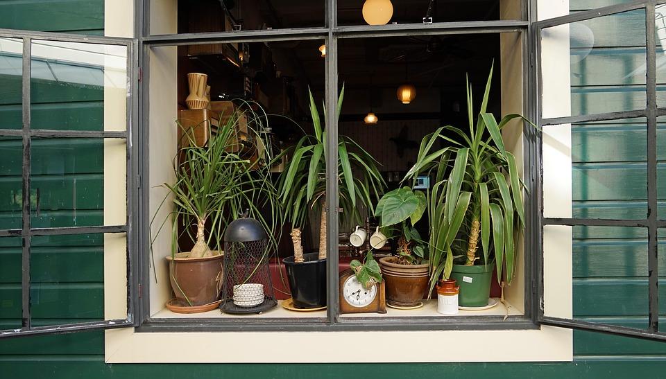 Dé oplossing om planten in leven te houden