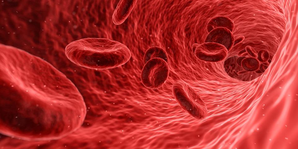 Kan bevolkingsonderzoek tijdig kans op scheuren slagader signaleren?